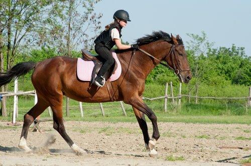 מרכז באת סוסים